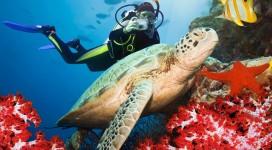 photodune-518950-green-turtle-underwater-m